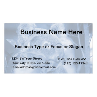 koala bear looking right blue marsupial pack of standard business cards