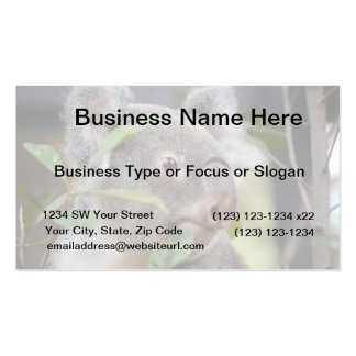 koala bear looking right c pack of standard business cards