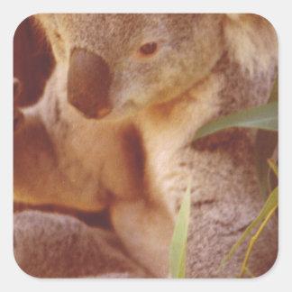 Koala Bear Love Square Sticker