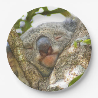 Koala Bear Paper Plate 9 Inch Paper Plate