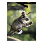 Koala Bear Post Cards