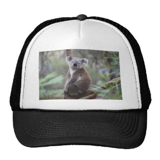 Koala Bear Safari Jungle Outback Congratulations Cap
