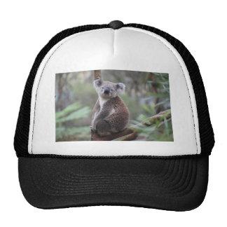 Koala Bear Safari Jungle Outback Congratulations Cap