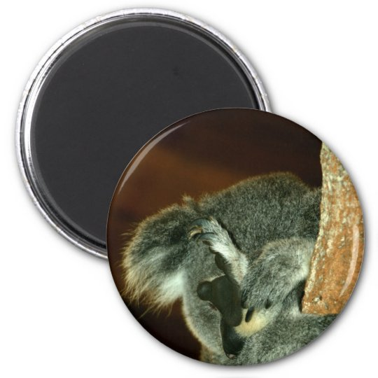 Koala Bear, Sleeping with paw over face 6 Cm Round Magnet
