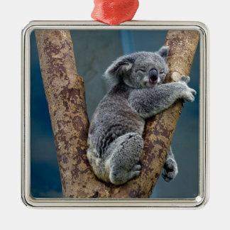 Koala Bear Sleeps Hugging A Tree Silver-Colored Square Decoration