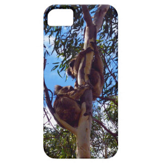 Koala-Bears_Climbing_iPhone SE + iPhone 5/5S Case