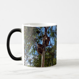 Koala_Bears_In_Trees,_agic_Morph_Coffee_Mug Magic Mug
