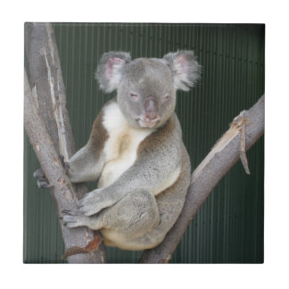 Koala Ceramic Tile