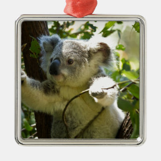 Koala cutie christmas ornament