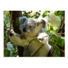 Koala cutie postcard