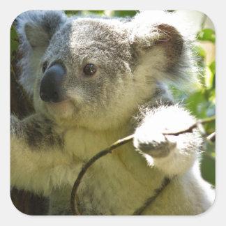 Koala cutie square sticker