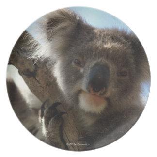 koala dinner plates