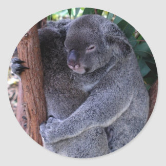 Koala Family Stickers