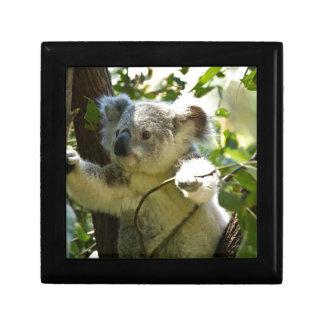 koala gift box