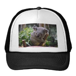 Koala Hats