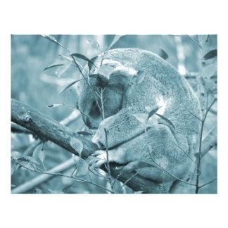 koala head down sleeping blue c custom flyer