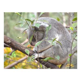 koala head down sleeping c full color flyer