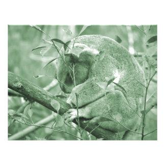 koala head down sleeping green c flyer design