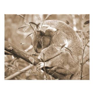 koala head down sleeping sepia c full color flyer