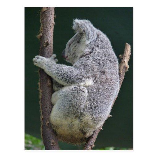 koala hug post card