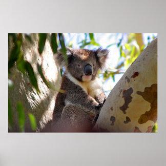 Koala Impresiones