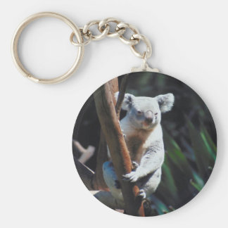 Koala in a tree.  Keychain