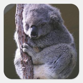 Koala in Tree Stickers