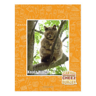 Koala Kitteh Postcard