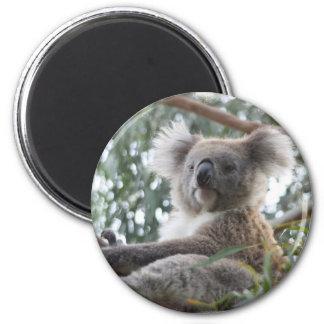 Koala Magnet Refrigerator Magnets