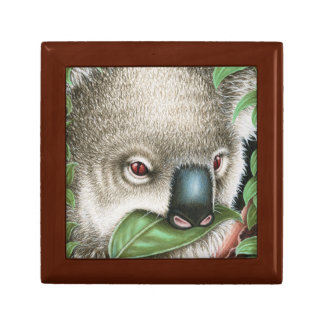Koala Muching a Leaf Gift Box
