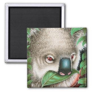 Koala Munching a Leaf Magnet