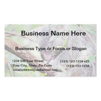 koala painted swirls  version sm c.jpg pack of standard business cards