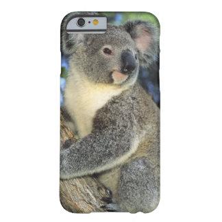 Koala, Phascolarctos cinereus), Australia, Barely There iPhone 6 Case