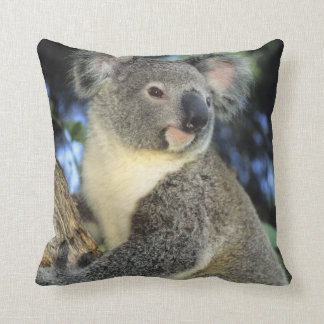 Koala, Phascolarctos cinereus), Australia, Cushion