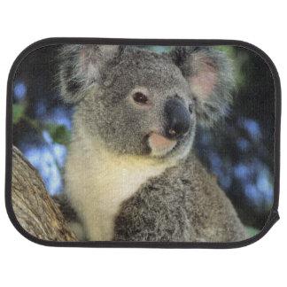 Koala, Phascolarctos cinereus), Australia, Floor Mat