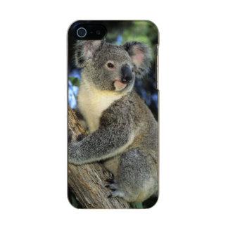 Koala, Phascolarctos cinereus), Australia, Incipio Feather® Shine iPhone 5 Case