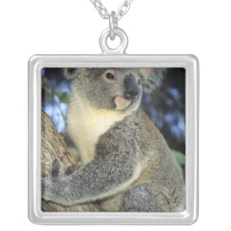 Koala, Phascolarctos cinereus), Australia, Silver Plated Necklace