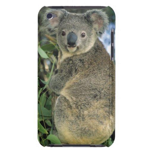 Koala, Phascolarctos cinereus), endangered, iPod Touch Covers