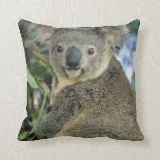 Koala, Phascolarctos cinereus), endangered, Cushion