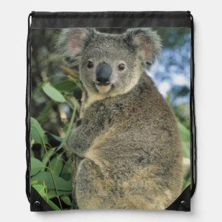 Koala, Phascolarctos cinereus), endangered, Drawstring Bag