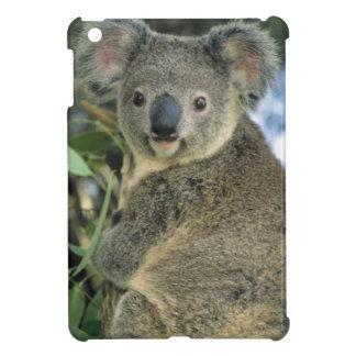 Koala, Phascolarctos cinereus), endangered, iPad Mini Cases