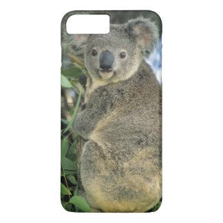 Koala, Phascolarctos cinereus), endangered, iPhone 8 Plus/7 Plus Case