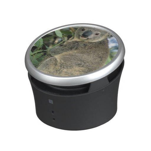 Koala, Phascolarctos cinereus), endangered, Bluetooth Speaker