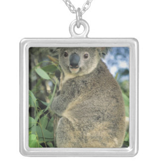 Koala, Phascolarctos cinereus), endangered, Silver Plated Necklace
