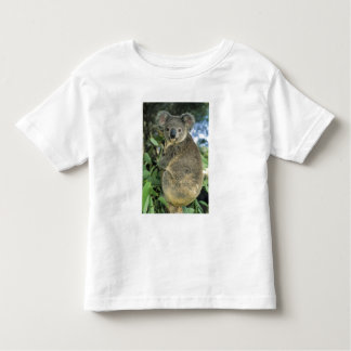 Koala, Phascolarctos cinereus), endangered, Toddler T-Shirt