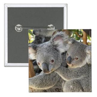 Koala Phascolarctos cinereus Queensland . 15 Cm Square Badge