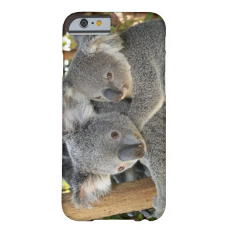 Koala Phascolarctos cinereus Queensland . Barely There iPhone 6 Case