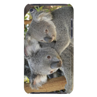 Koala Phascolarctos cinereus Queensland . iPod Touch Cover
