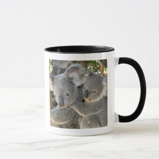 Koala Phascolarctos cinereus Queensland . Mug