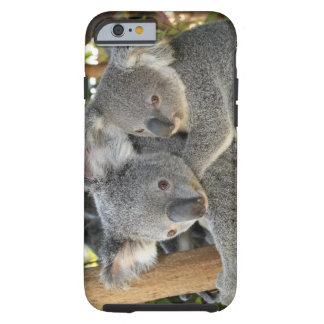 Koala Phascolarctos cinereus Queensland . Tough iPhone 6 Case
